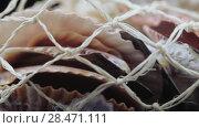 Купить «Set of seashells bulk», видеоролик № 28471111, снято 21 марта 2018 г. (c) Потийко Сергей / Фотобанк Лори
