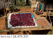 Купить «Spices drying outside a house, Chiang Rai, Thailand», фото № 28479331, снято 11 декабря 2016 г. (c) Ingram Publishing / Фотобанк Лори