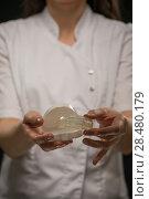 Купить «Female doctor orthodontist showing mouthguard teeth dental trainer», фото № 28480179, снято 15 мая 2014 г. (c) Ingram Publishing / Фотобанк Лори