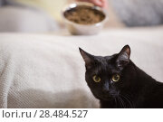 Купить «Unrecognizable woman feeding her black cat at home», фото № 28484527, снято 23 июня 2013 г. (c) Ingram Publishing / Фотобанк Лори