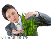 Купить «Adult business woman taking care about her plant. Safety and confidence guaranty for young business concept», фото № 28485879, снято 17 ноября 2012 г. (c) Ingram Publishing / Фотобанк Лори