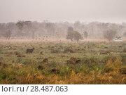 Купить «Minibus with visitors on photographic safari with variety of wildlife including Defassa waterbuck (Kobus ellipsiprymnus) and other antelope, Saddlebill...», фото № 28487063, снято 23 июля 2018 г. (c) Nature Picture Library / Фотобанк Лори