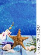 Купить «Starfish seashells with hyacinth flower and white orchid on blue wood  background», фото № 28493243, снято 27 марта 2019 г. (c) Ingram Publishing / Фотобанк Лори