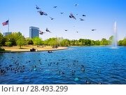 Купить «Houston Mc govern lake with doves spring water and green grass in Texas», фото № 28493299, снято 23 октября 2018 г. (c) Ingram Publishing / Фотобанк Лори