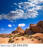Skull rock in Joshua tree National Park Mohave desert Yucca Valley California USA (2013 год). Стоковое фото, фотограф Tono Balaguer / Ingram Publishing / Фотобанк Лори