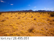 Mohave desert in California Yucca Valley USA (2013 год). Стоковое фото, фотограф Tono Balaguer / Ingram Publishing / Фотобанк Лори