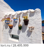 Купить «Menorca Es Grau white house flower pots detail in Balearic Islands», фото № 28495999, снято 30 мая 2013 г. (c) Ingram Publishing / Фотобанк Лори