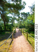 Купить «Mediterranan pine forest track in Menorca in Cala Macarella of Balearic islands», фото № 28496023, снято 25 мая 2013 г. (c) Ingram Publishing / Фотобанк Лори