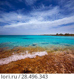Купить «Menorca Son Saura beach in Ciutadella turquoise color at Balearic islands», фото № 28496343, снято 25 мая 2013 г. (c) Ingram Publishing / Фотобанк Лори