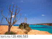 Купить «Formentera Cala Saona beach one of the best beaches in world near Ibiza», фото № 28496583, снято 16 августа 2018 г. (c) Ingram Publishing / Фотобанк Лори