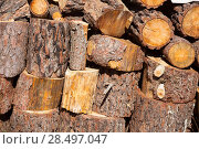 Купить «Firewood of pine tree stacked in a row at Spain», фото № 28497047, снято 13 октября 2013 г. (c) Ingram Publishing / Фотобанк Лори