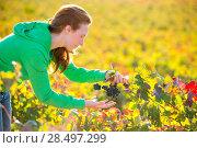 Купить «Farmer woman in vineyard harvest autumn leaves in mediterranean field», фото № 28497299, снято 11 октября 2013 г. (c) Ingram Publishing / Фотобанк Лори