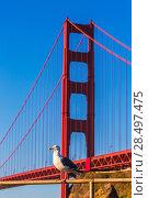 Купить «San Francisco Golden Gate Bridge seagull California USA», фото № 28497475, снято 21 апреля 2013 г. (c) Ingram Publishing / Фотобанк Лори