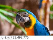 Купить «Blue Parrot portrait with yellow neck in the park», фото № 28498775, снято 22 апреля 2019 г. (c) Ingram Publishing / Фотобанк Лори