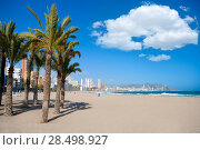 Купить «Benidorm Alicante beach palm trees and Mediterranean sea of Spain», фото № 28498927, снято 24 февраля 2019 г. (c) Ingram Publishing / Фотобанк Лори