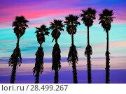 Купить «California sunset palm trees washingtonia western surf flavour in US», фото № 28499267, снято 23 апреля 2013 г. (c) Ingram Publishing / Фотобанк Лори