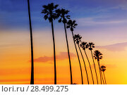 Купить «California sunset Palm tree rows in Santa Barbara US», фото № 28499275, снято 23 апреля 2013 г. (c) Ingram Publishing / Фотобанк Лори