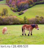 Купить «Horses and cows grazing in Pyrenees green autumn meadows at Spain», фото № 28499531, снято 3 ноября 2013 г. (c) Ingram Publishing / Фотобанк Лори