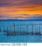 Купить «Albufera sunset lake park in Valencia el saler colorful sky of Spain», фото № 28500183, снято 15 ноября 2013 г. (c) Ingram Publishing / Фотобанк Лори