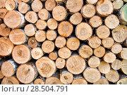 Купить «Фон из спилов деревянных чурок. Сложенные березовые дрова», фото № 28504791, снято 1 июня 2018 г. (c) Наталья Осипова / Фотобанк Лори