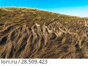 Купить «Прошлогодняя трава», фото № 28509423, снято 14 мая 2018 г. (c) Владимир Федечкин / Фотобанк Лори