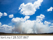 Купить «Grass fires in the distance, Masai Mara National Reserve, Kenya. September.», фото № 28537867, снято 27 марта 2019 г. (c) Nature Picture Library / Фотобанк Лори