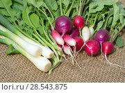 Купить «Свежие овощи и зелень на мешковине», фото № 28543875, снято 4 июня 2018 г. (c) Елена Коромыслова / Фотобанк Лори