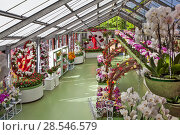 Купить «Композиции из орхидей. Павильон Беатрикс (Beatrix). Королевский парк цветов Кёкенхоф (Keukenhof). Лиссе. Нидерланды», фото № 28546579, снято 4 мая 2018 г. (c) Сергей Афанасьев / Фотобанк Лори