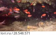 Купить «Life in underwater cave - Indian Ocean, Maldives, Asia», видеоролик № 28548571, снято 6 июня 2018 г. (c) Некрасов Андрей / Фотобанк Лори