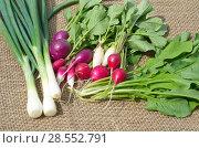 Купить «Свежие овощи и зелень на мешковине», фото № 28552791, снято 4 июня 2018 г. (c) Елена Коромыслова / Фотобанк Лори