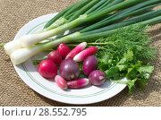 Купить «Свежая зелень и редис на тарелке», фото № 28552795, снято 4 июня 2018 г. (c) Елена Коромыслова / Фотобанк Лори