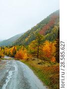 Купить «Mountains with colorful autumn forest at overcast. Beautiful landscape in autumn.», фото № 28585627, снято 24 сентября 2017 г. (c) Евгений Глазунов / Фотобанк Лори