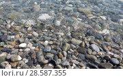 Купить «Fragment of Black Sea coast with a pebble beach», видеоролик № 28587355, снято 15 июня 2018 г. (c) Володина Ольга / Фотобанк Лори