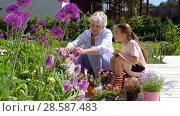 Купить «grandmother and girl study flowers at garden», видеоролик № 28587483, снято 11 июня 2018 г. (c) Syda Productions / Фотобанк Лори
