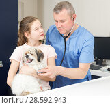 Купить «Cheerful girl with dog at veterinarian clinic», фото № 28592943, снято 3 мая 2018 г. (c) Яков Филимонов / Фотобанк Лори