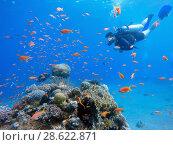 Купить «Дайвер плавает над коралловым рифом в Красном море», фото № 28622871, снято 19 мая 2018 г. (c) Irina Opachevsky / Фотобанк Лори