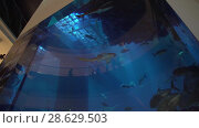 Купить «Dubai Aquarium and Under Water Zoo in the shopping mall's interior Dubai Mall stock footage video», видеоролик № 28629503, снято 9 апреля 2018 г. (c) Юлия Машкова / Фотобанк Лори