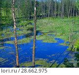 Купить «small lake in forest in Russia», фото № 28662975, снято 16 июня 2018 г. (c) Володина Ольга / Фотобанк Лори