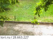 Купить «Грибной дождь при свете солнца. Лужа в пузырях», фото № 28663227, снято 23 июня 2018 г. (c) Алёшина Оксана / Фотобанк Лори
