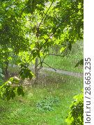 Купить «Грибной (слепой) дождь при солнечном свете», фото № 28663235, снято 23 июня 2018 г. (c) Алёшина Оксана / Фотобанк Лори
