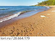 Купить «Warm summer afternoon at the shore of Lake Baikal. Beautiful sandy beach on the east coast», фото № 28664179, снято 27 августа 2016 г. (c) Виктория Катьянова / Фотобанк Лори