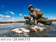 Купить «winter fishing on ice. Roach fish catch in fisherman or angler hands», фото № 28664515, снято 17 марта 2018 г. (c) Дмитрий Калиновский / Фотобанк Лори