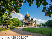 Купить «Исаакиевский собор и сирень. St. Isaac's Cathedral  and lilacs», фото № 28664607, снято 3 июня 2018 г. (c) Baturina Yuliya / Фотобанк Лори