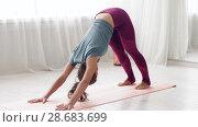 Купить «woman does downward-facing dog pose at yoga studio», видеоролик № 28683699, снято 28 июня 2018 г. (c) Syda Productions / Фотобанк Лори