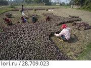 Купить «A labor holding two bundle of Lal Shak (Red amaranth) at Savar, Bangladesh.», фото № 28709023, снято 28 января 2018 г. (c) age Fotostock / Фотобанк Лори