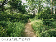 Купить «Lane, Path, Way In Summer Deciduous Forest.», фото № 28712499, снято 3 июня 2015 г. (c) easy Fotostock / Фотобанк Лори