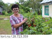 Купить «Женщина у куста красной смородины», фото № 28723359, снято 5 июля 2018 г. (c) Ирина Краснова / Фотобанк Лори