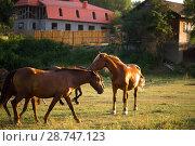 Купить «Табун лошадей в поле», фото № 28747123, снято 9 июня 2018 г. (c) Марина Володько / Фотобанк Лори
