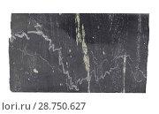 Купить «Кварцевые прожилки, кварц-пиритовые линзы и вкрапленность в углеродистых сланцах», фото № 28750627, снято 8 февраля 2018 г. (c) Анна Зеленская / Фотобанк Лори