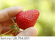 Купить «Strawberry.», фото № 28754651, снято 1 июня 2018 г. (c) easy Fotostock / Фотобанк Лори